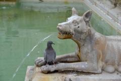 Roma_farkasa_Siena_2012_11_resize