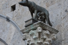Roma_farkasa_Siena_2012_13_resize