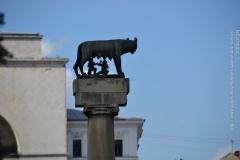Roma_farkasa_Temesvar_2012_02_resize