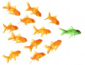 Goldfish_leaders