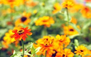 nyárvégi virágok