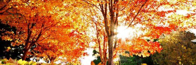 Újabb őszi programok a klubban